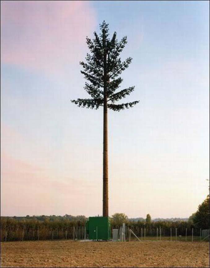 Νομίζετε πως πρόκειται για ένα δένδρο; Κοιτάξτε πιο προσεκτικά... (3)