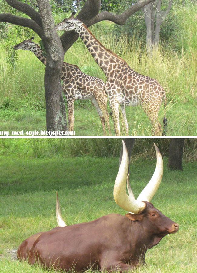 Animal Kingdom 4