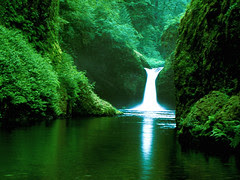 forest_waterfall_xl