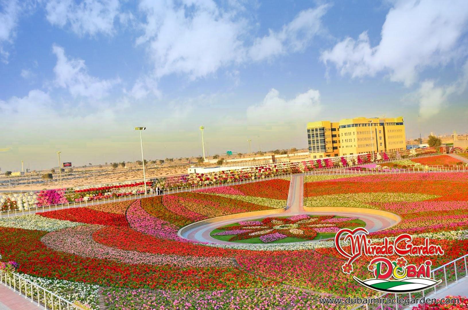 Dubai Miracle Garden 08