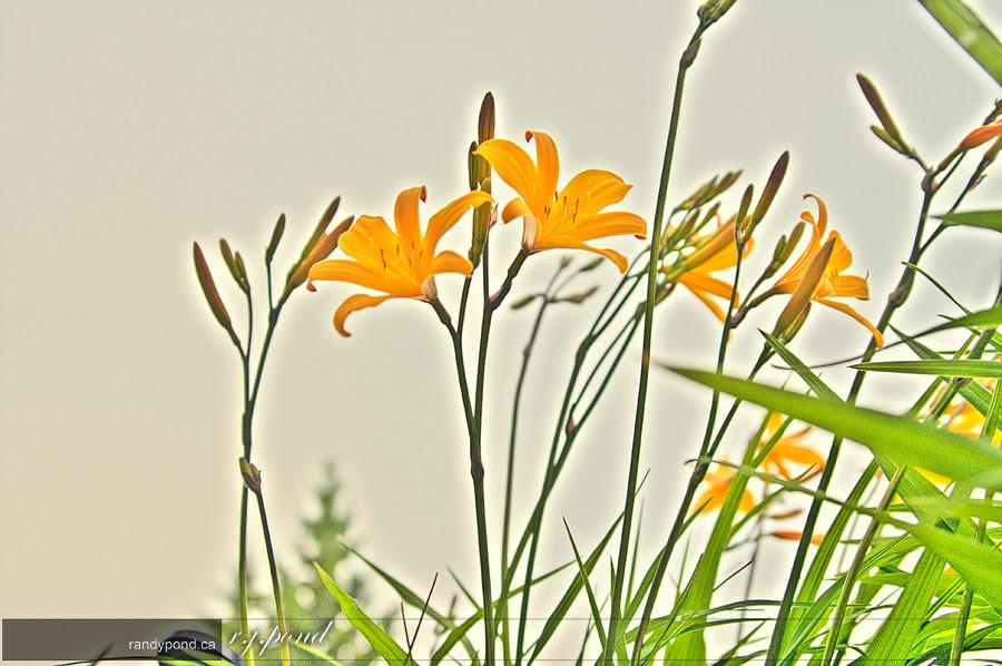 ~ 168/365 Flowers ~
