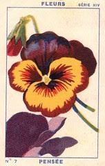 milliat fleurs009