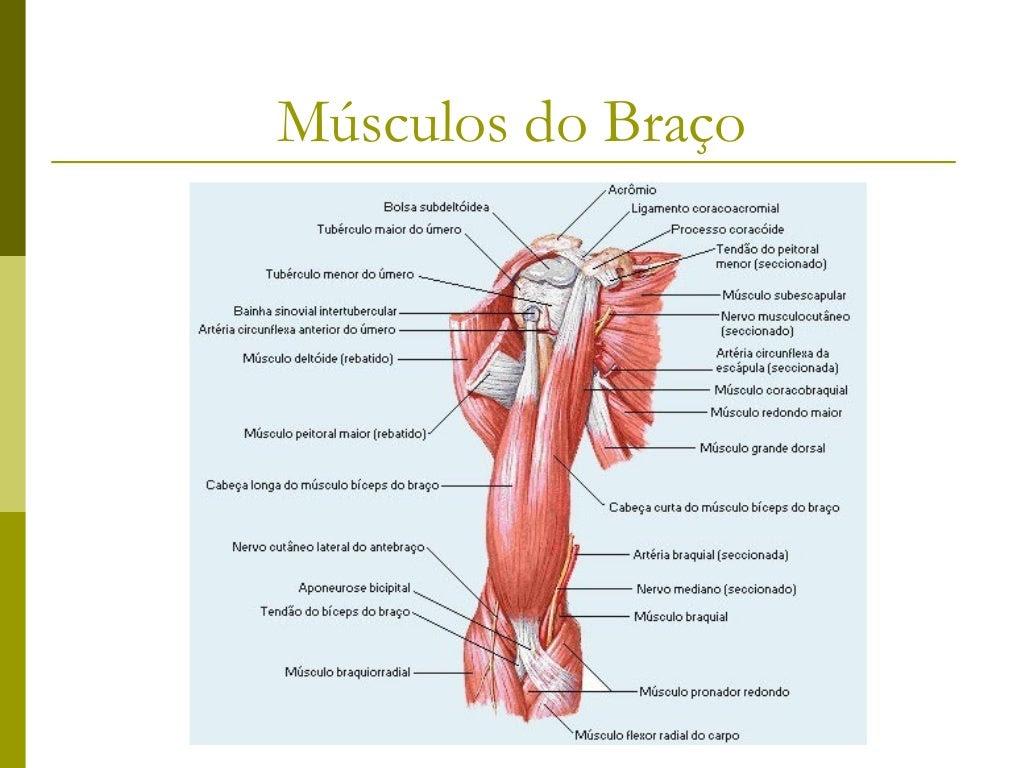 Músculos do Antebraço             - Compartimento Anterior -Músculo           Origem               Inserção             In...