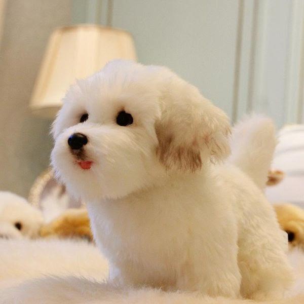 hunde baby bilder  malvorlagen gratis