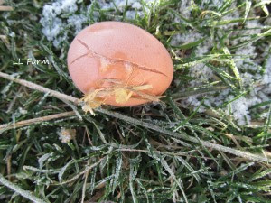 a frozen egg