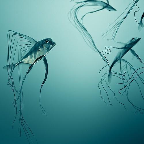Fish Texture por ►CubaGallery