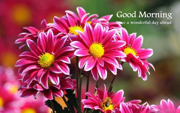 Good Morning Have A Wonderful Day Ahead Pictures Photos And
