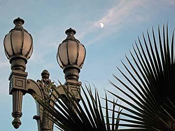 [lamp, palm, moon]