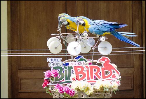 Macaws racing bikes at the Bird Park