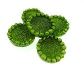 Buttons, light green resin 2pcs - oldish
