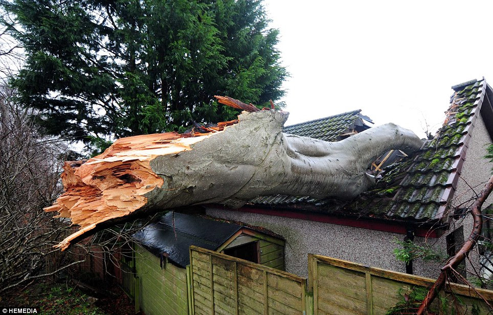The woods at the back of the Foster home where the massive tree fell from