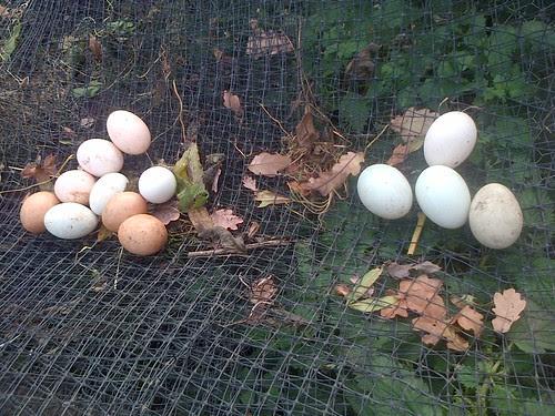 eggs November 2013