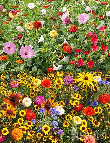 Childrens Garden And Cottage Garden Seed Mat Duo