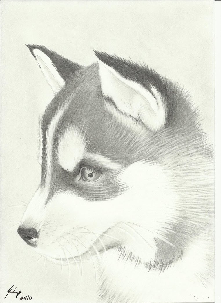 Easy Husky Drawing at GetDrawings | Free download