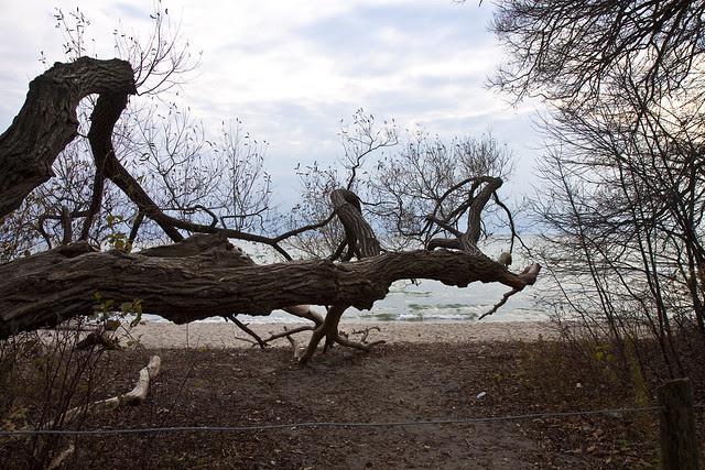 fallen tree on beach