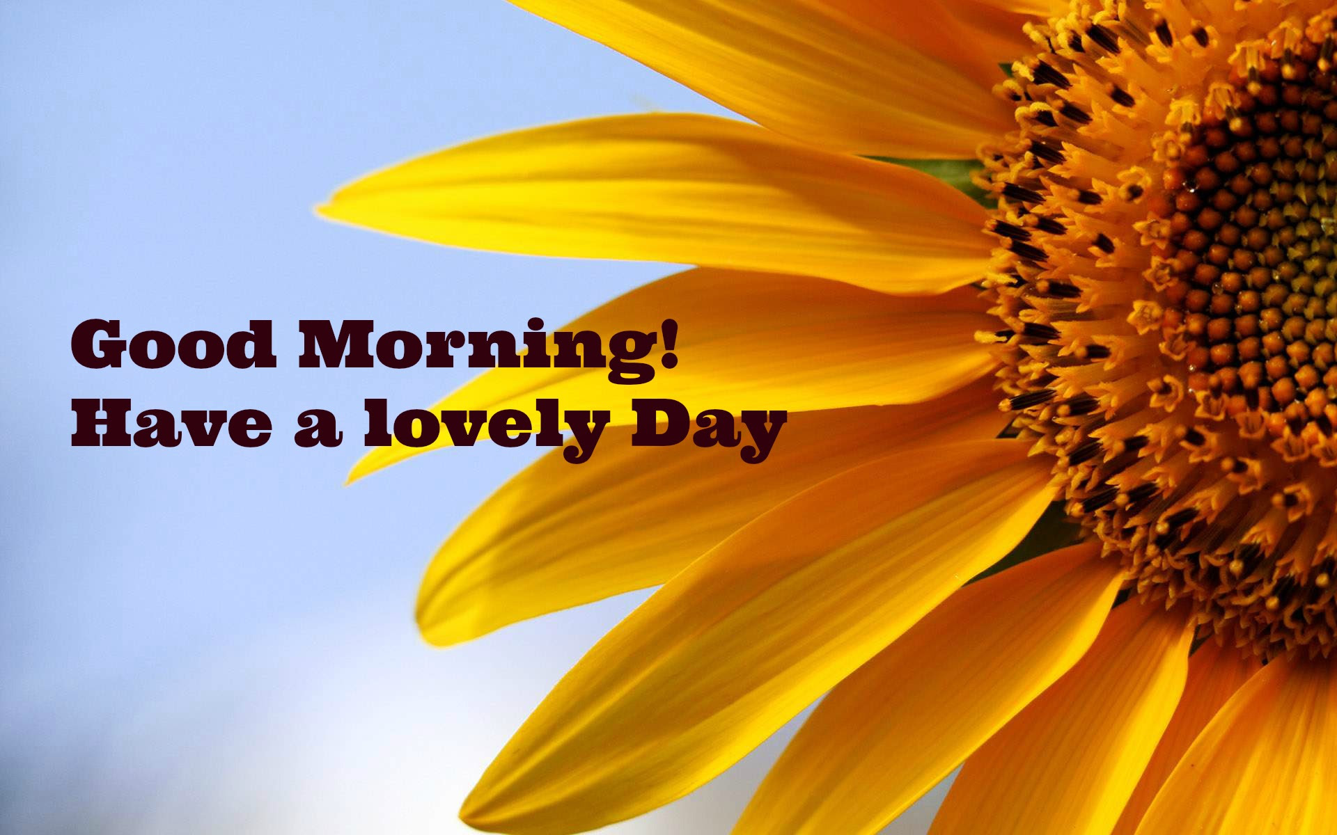35 BEST INSPIRATIONAL MORNING QUOTES TO MAKE YOUR DAY ...