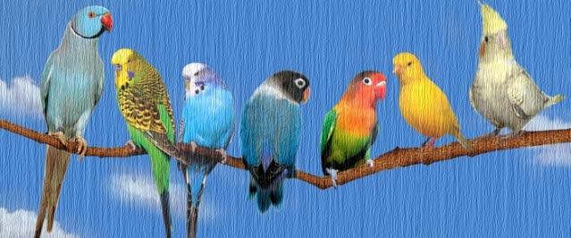 430 Gambar Binatang Bisa Terbang Gratis