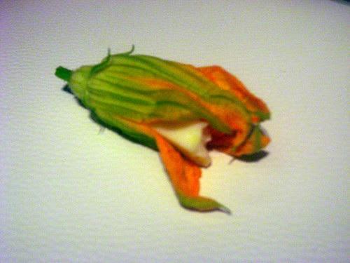 flor de calabaza prep 5