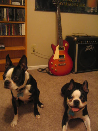 rock and roll terriers