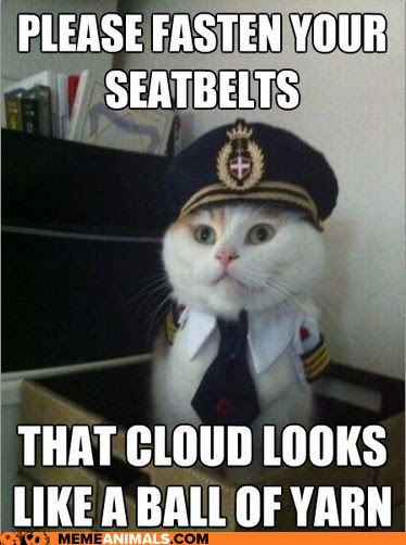 Meme Animals: Captain Kitteh - Have Your Barf Bags at the Ready!