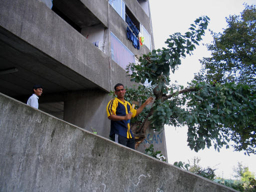 pulizie ottobre 2006