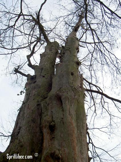 pinnacletrees