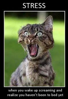 Stressed Animal Picture Quotes. QuotesGram