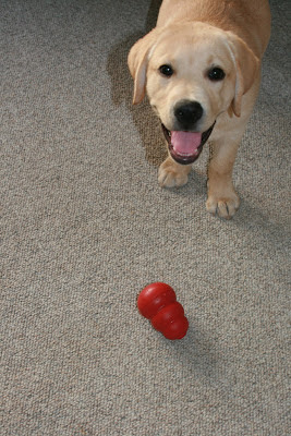 Cooper playing with his Kong