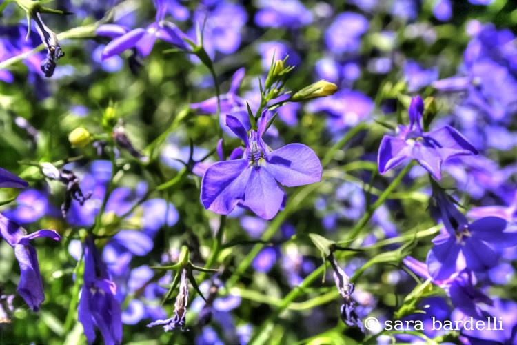 fiori 8