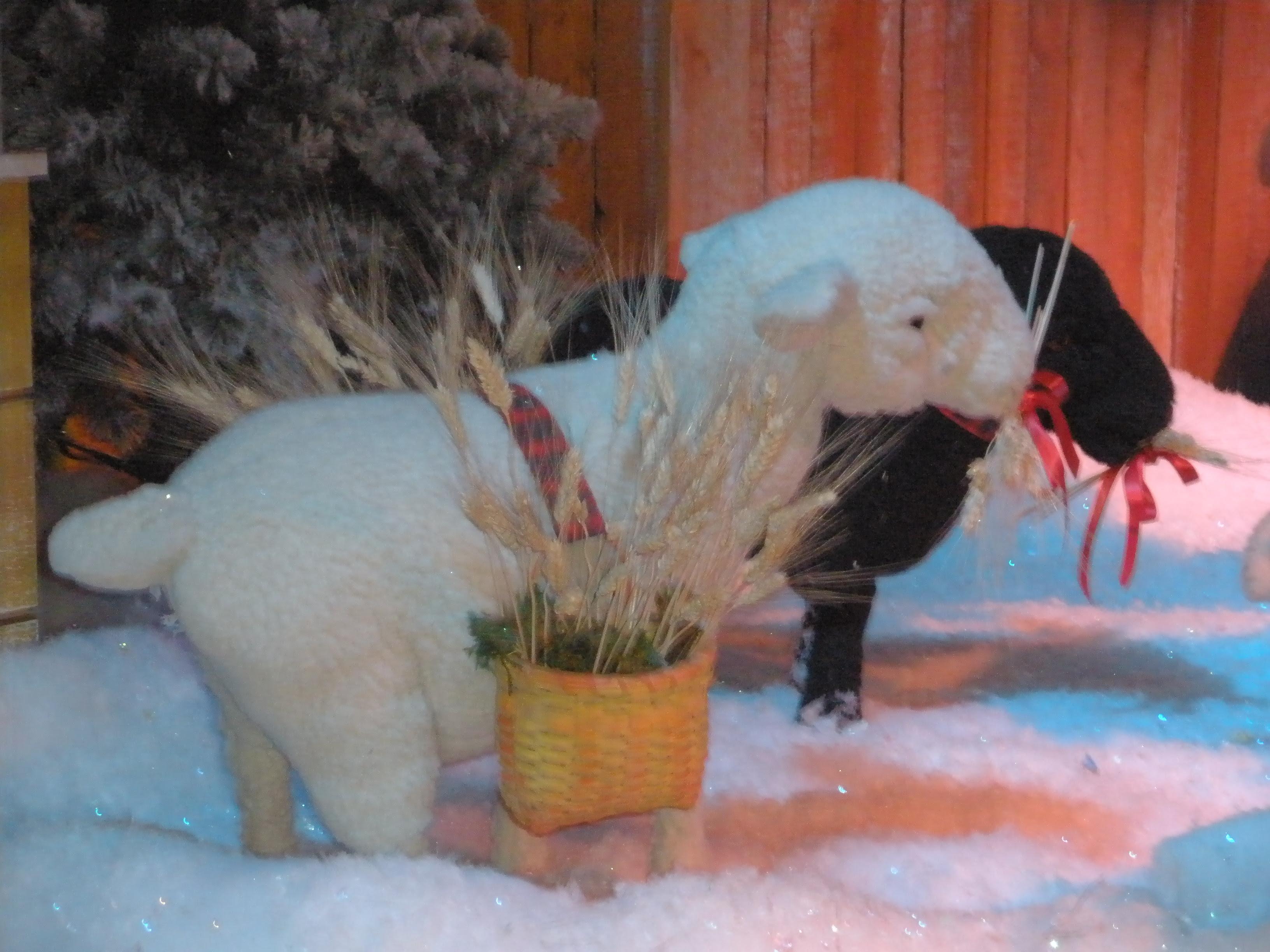 Sheep at Macy's Holiday Show