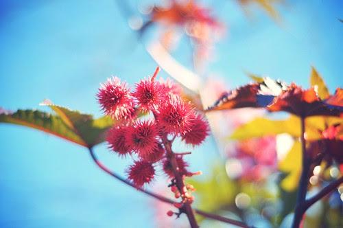 Spikey berries