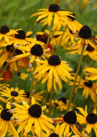 Flower craziness