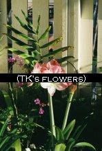 TK's Flowers