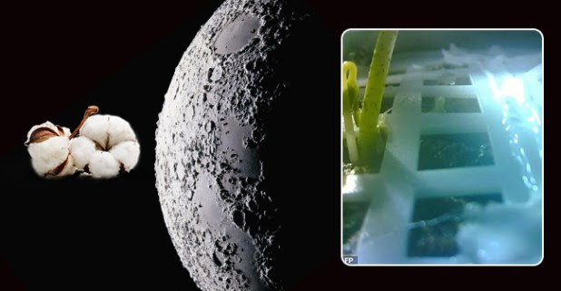China is the first country to reach so far side of the Moon and grow Cotton Plant there