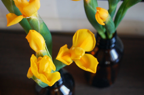 yellow iris, brown glass