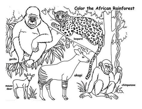 rainforest african rainforest animals coloring page