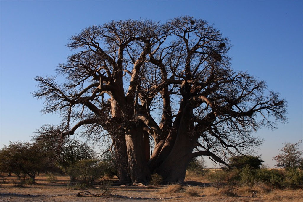 Botswana Jack's Camp - 318IMG_8424.JPG