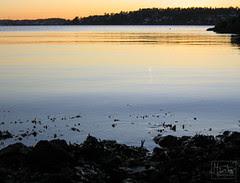 365 :: 21.11 - sunset :: solnedgang