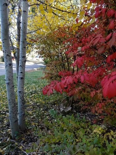 Autumn in my Front Yard