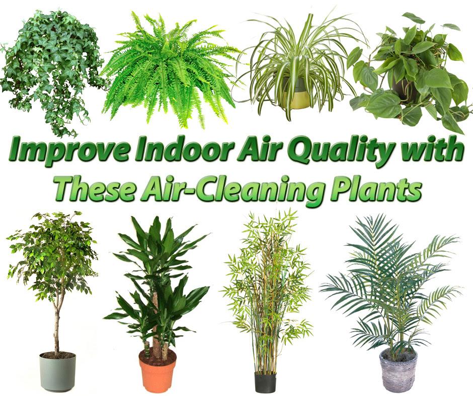 iaq_plants