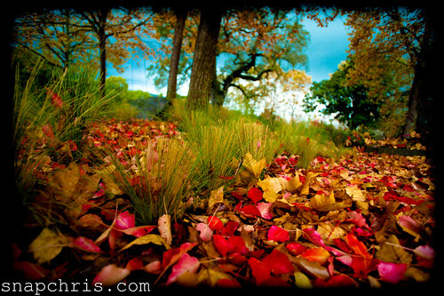 Autumn colors in the Napa valley