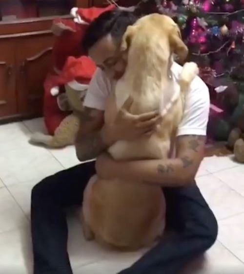 Temeroso perrito que sobrevivió a una delicada cirugía halla consuelo en los brazos de su dueño