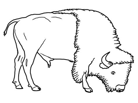 bison coloring pages getcoloringpagescom