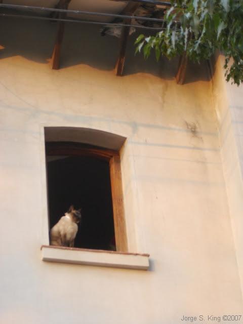 El gato y paloma