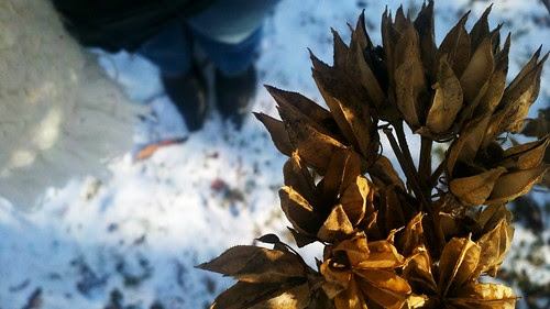 """Winter """"Flowers"""""""