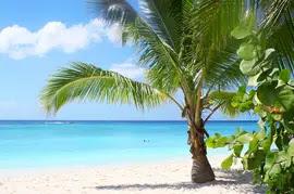 Envirocare4ucom Florida Palm Trees