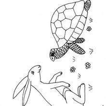 Dibujos Para Colorear El Liebre Y La Tortuga Eshellokidscom
