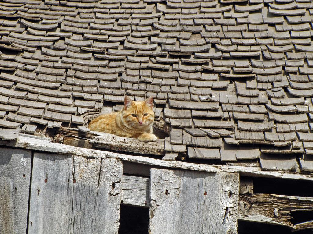 Roof-Top Nap