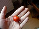 My one and only self-grown tomato, January 2010