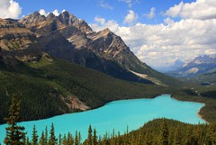 Classic view of a cloudfree Peyto Lake, Banff ...